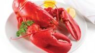 Lobster Sangat Cocok Sebagai Menu Diet Anda